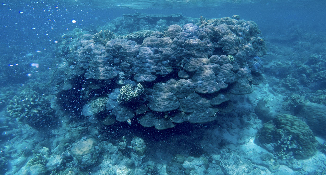 Coral in the ocean.